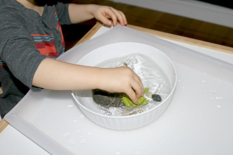 preschooler playing with frog in bowl of water