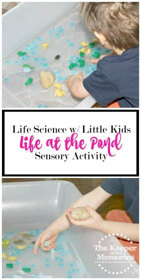 collage of pond sensory activity images with text overlay: Life Science with Little Kids Life at the Pond Sensory Activity