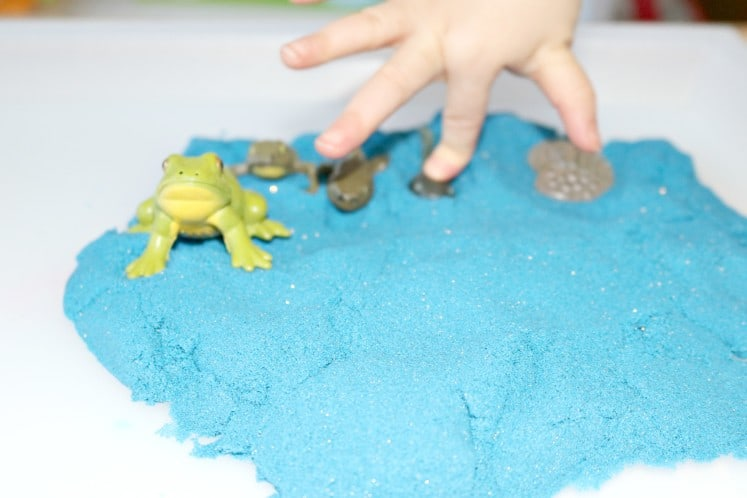 preschooler putting frog life cycle figurines in to blue sand