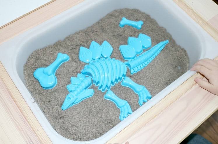 Fossil Sensory 5