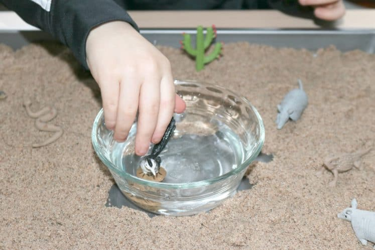 preschooler putting bird figurine into water dish as part of desert STEAM station
