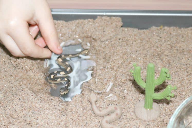 Preschool Desert Sensory Activity 5