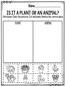 Is It A Plant Or An Animal
