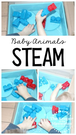 baby otter STEAM activity with text: Baby Animals STEAM