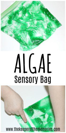 Pond Sensory Bag images with text: Algae Sensory Bag