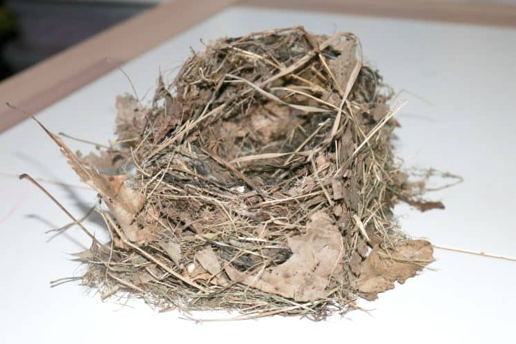 Bird Nest Craft 13