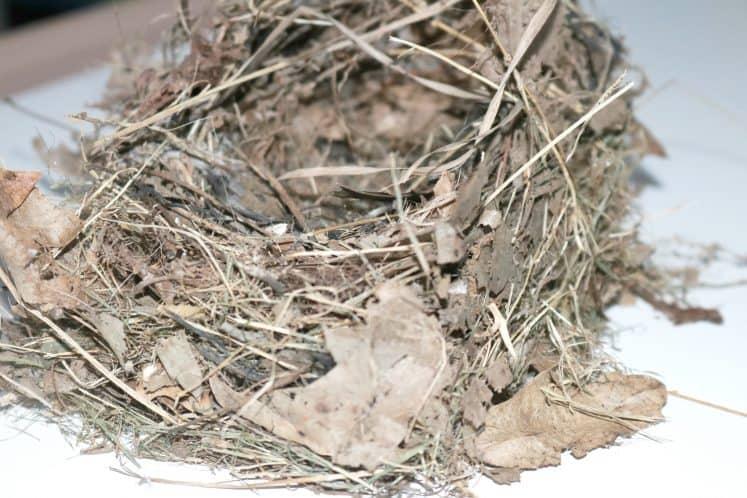 bird nest from backyard