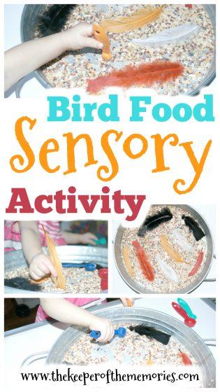 Bird Food Sensory Activity