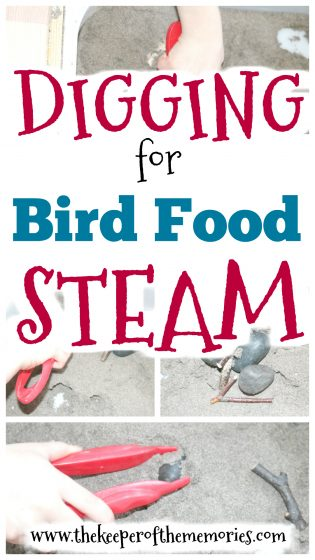 sticks and stones in dirt sensory bin with text: Preschool Bird Theme STEAM