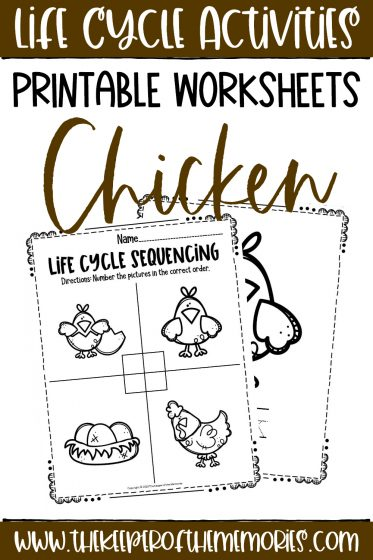 collage of Chicken Life Cycle Printable Worksheets with text: Life Cycle Activities Printable Worksheets Chicken