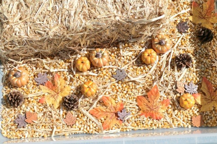 nature items in fall sensory bin