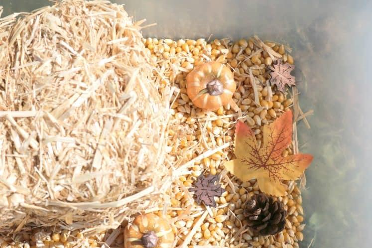mini pumpkins, artificial leaves and small pine cones in fall sensory bin