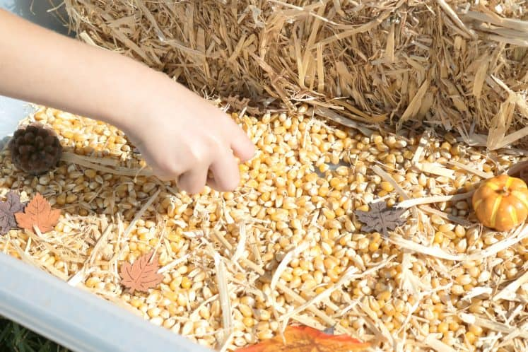 preschooler exploring straw in fall sensory bin