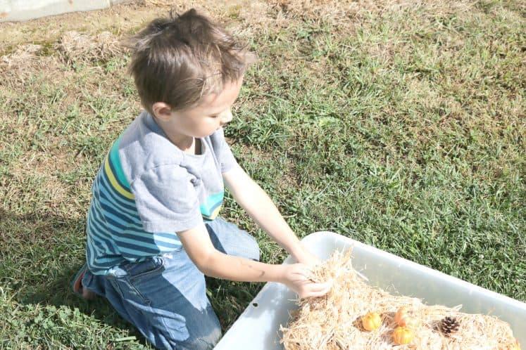 preschooler exploring fall sensory bin