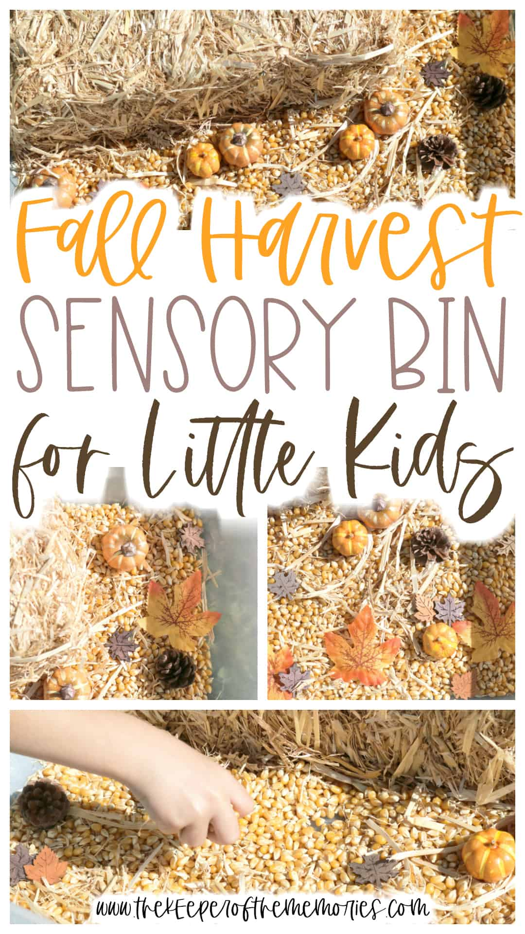 Fall Sensory Bin for Preschoolers & Kindergartners