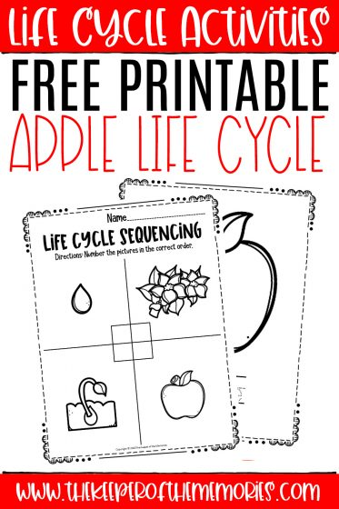 Apple Life Cycle Worksheets with text: Life Cycle Activities Free Printable Apple Life Cycle