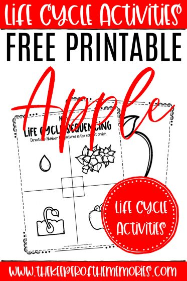 Apple Life Cycle Worksheets with text: Life Cycle Activities Free Printable Apple Life Cycle Activities