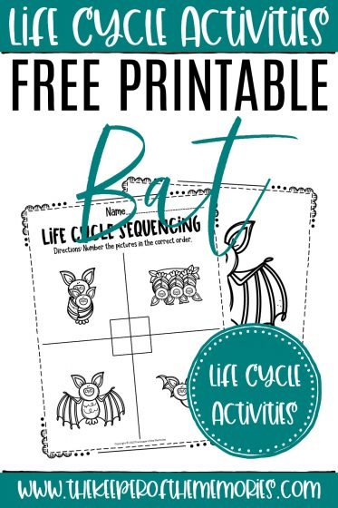 collage of Bat Life Cycle Worksheets with text: Life Cycle Activities Free Printable Bat Life Cycle Activities