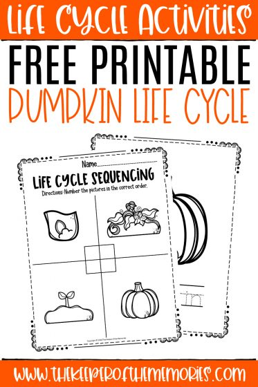 Pumpkin Life Cycle Worksheets with text: Life Cycle Activities Free Printable Pumpkin Life Cycle