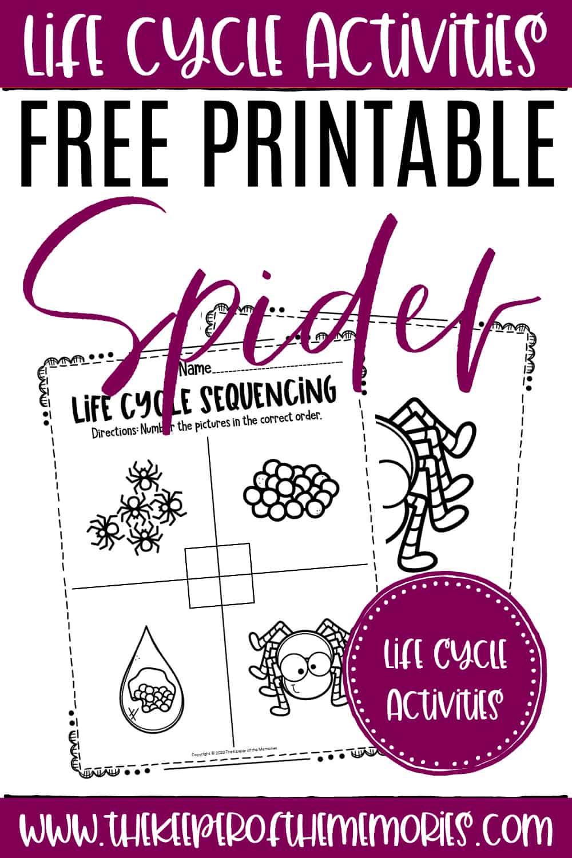 Free Printable Spider Life Cycle Worksheets