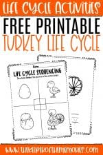 Free Printable Turkey Life Cycle Worksheets