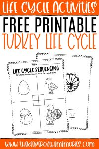 collage of turkey life cycle worksheets with text: Free Printable Turkey Life Cycle