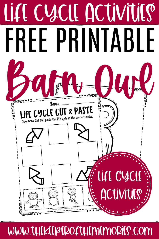 Free Printable Owl Life Cycle Worksheets