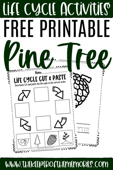 collage of pine tree life cycle worksheets with text: Life Cycle Activities Free Printable Pine Tree Life Cycle