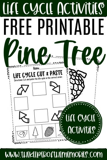 collage of pine tree life cycle worksheets with text: Life Cycle Activities Free Printable Pine Tree Life Cycle Activities