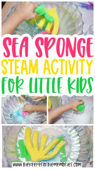 collage of sea sponge activity images with text: Sea Sponge STEAM Activity for Little Kids