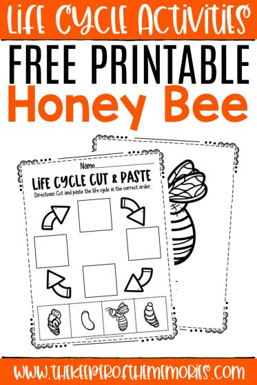 collage of bee life cycle worksheets with text: Life Cycle Activities Free Printable Honey Bee