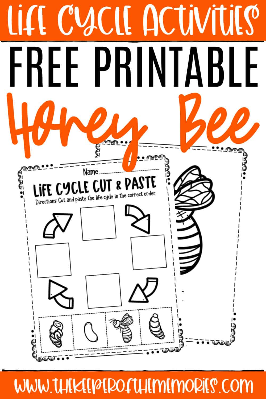 Free Printable Bee Life Cycle Worksheets