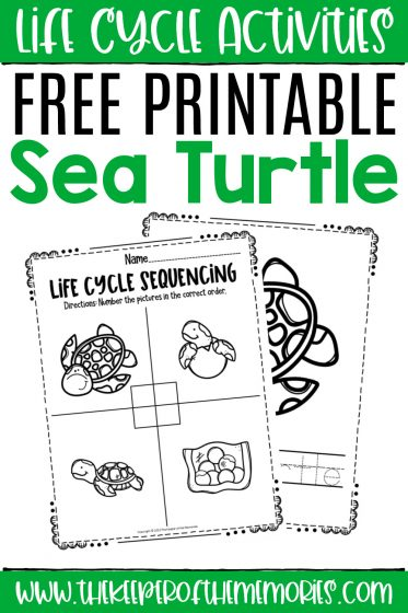 collage of Sea Turtle Life Cycle Worksheets with text: Life Cycle Activities Free Printable Sea Turtle