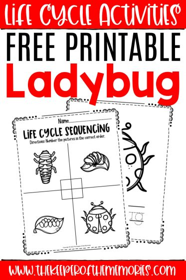 ladybug life cycle worksheets with text: Life Cycle Activities Free Printable Ladybug