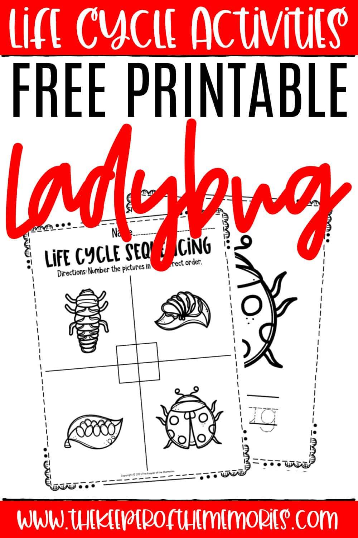 Free Printable Ladybug Life Cycle Worksheets